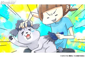 『犬と猫どっちも飼ってると毎日たのしい』3月5日(金)放送 #21「ブラッシング」場面写真公開!